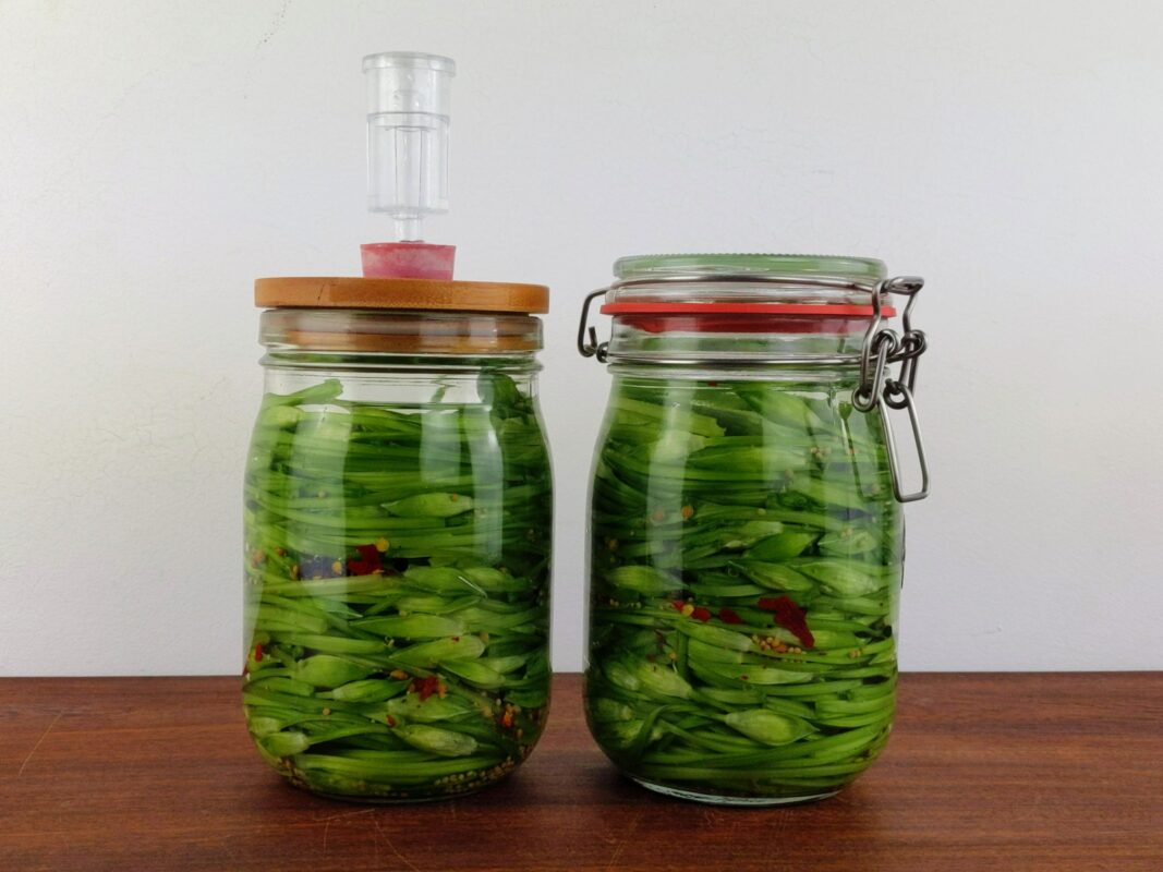 making pickled wild garlic buds in fermentation jars